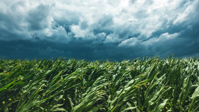 regimen agricola